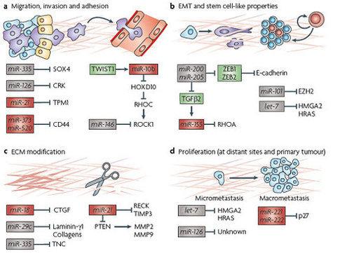 rna结合蛋白免疫沉淀(rip)技术(一)