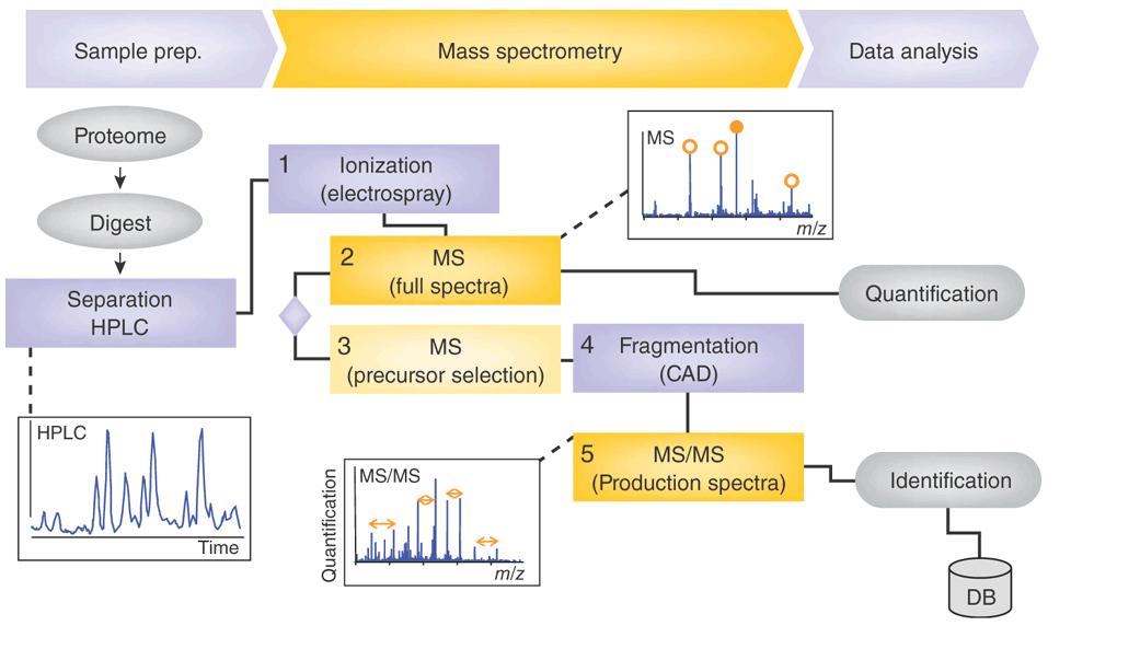 蛋白质质谱分析